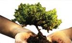 روز درختكاري و آغاز هفته منابع طبيعي تجديد شونده