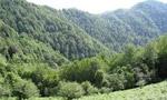قسمت وسيعي از جنگل هاي شمال طعمه حريق شد.(1329 ش)