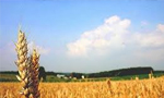وزارت تولیدات کشاورزی منحل شد(1350ش)