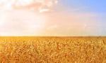 ايران پنجاه هزار تن گندم از امريکا خريداري کرد.(1335 ش)