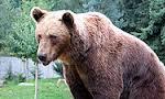 مدیر باغ وحش تبریز را خرس خورد(1349ش)