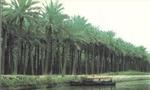 یک قایق ایرانی با 37 مسافر در آب های شط العرب غرق شد(1354ش)