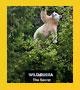 دانلود مستند های نشنال جئوگرافیک: جنگل راز آمیز (کیفیت بالا)