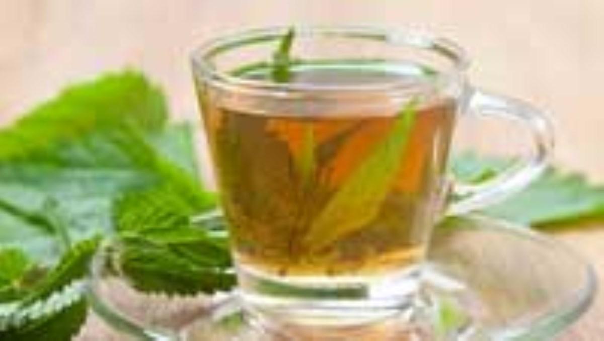 خواص درمانی چای گزنه