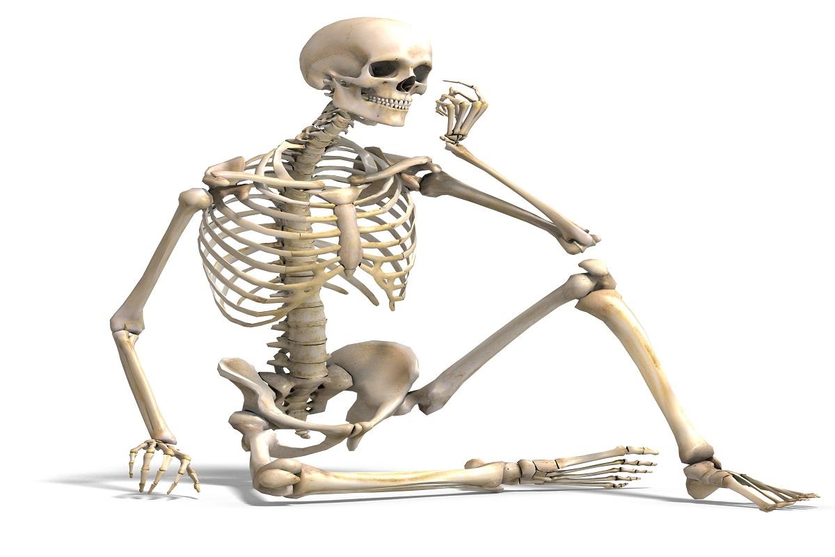 استخوان بندی اندام تحتانی