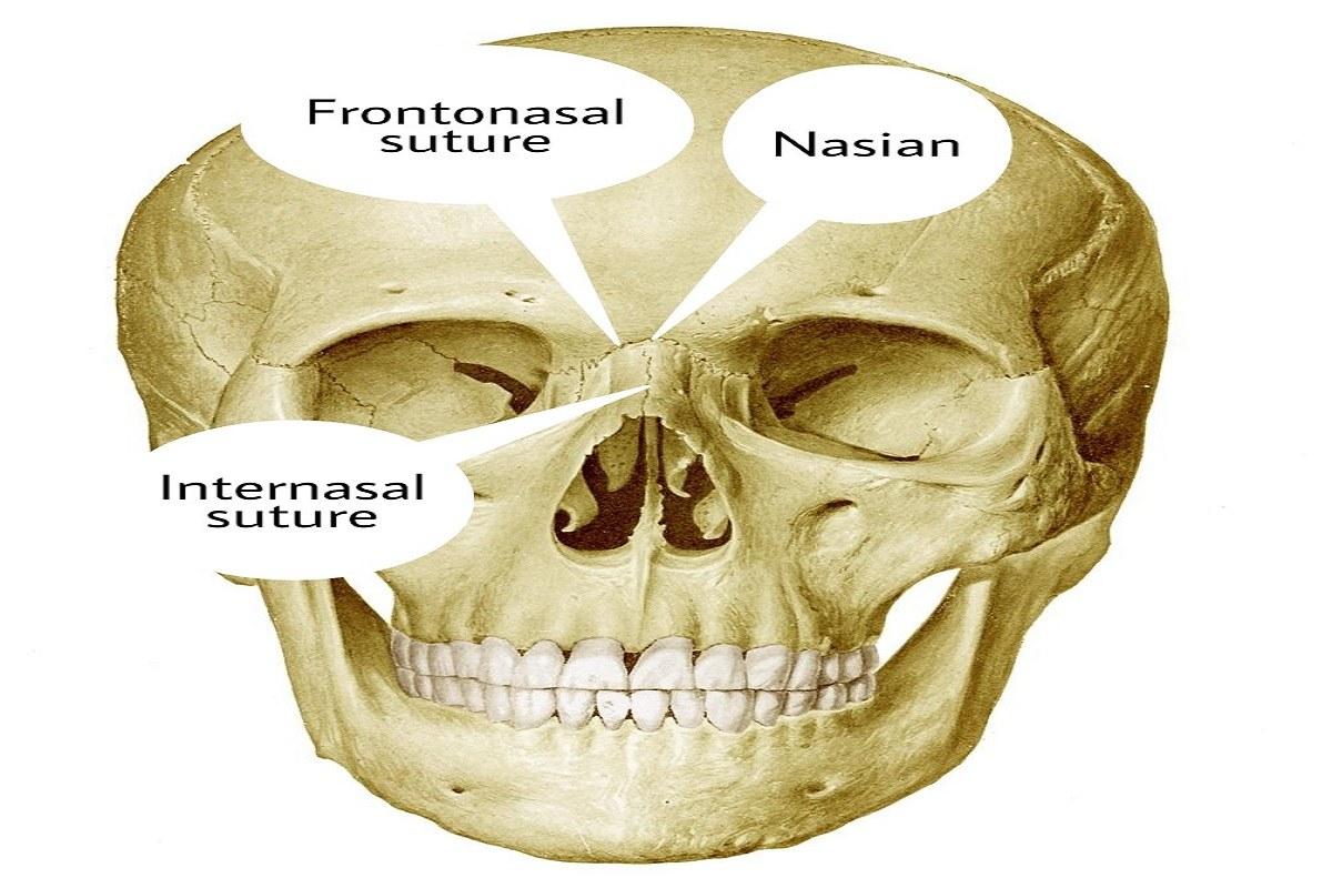 استخوان بندی سر و گردن
