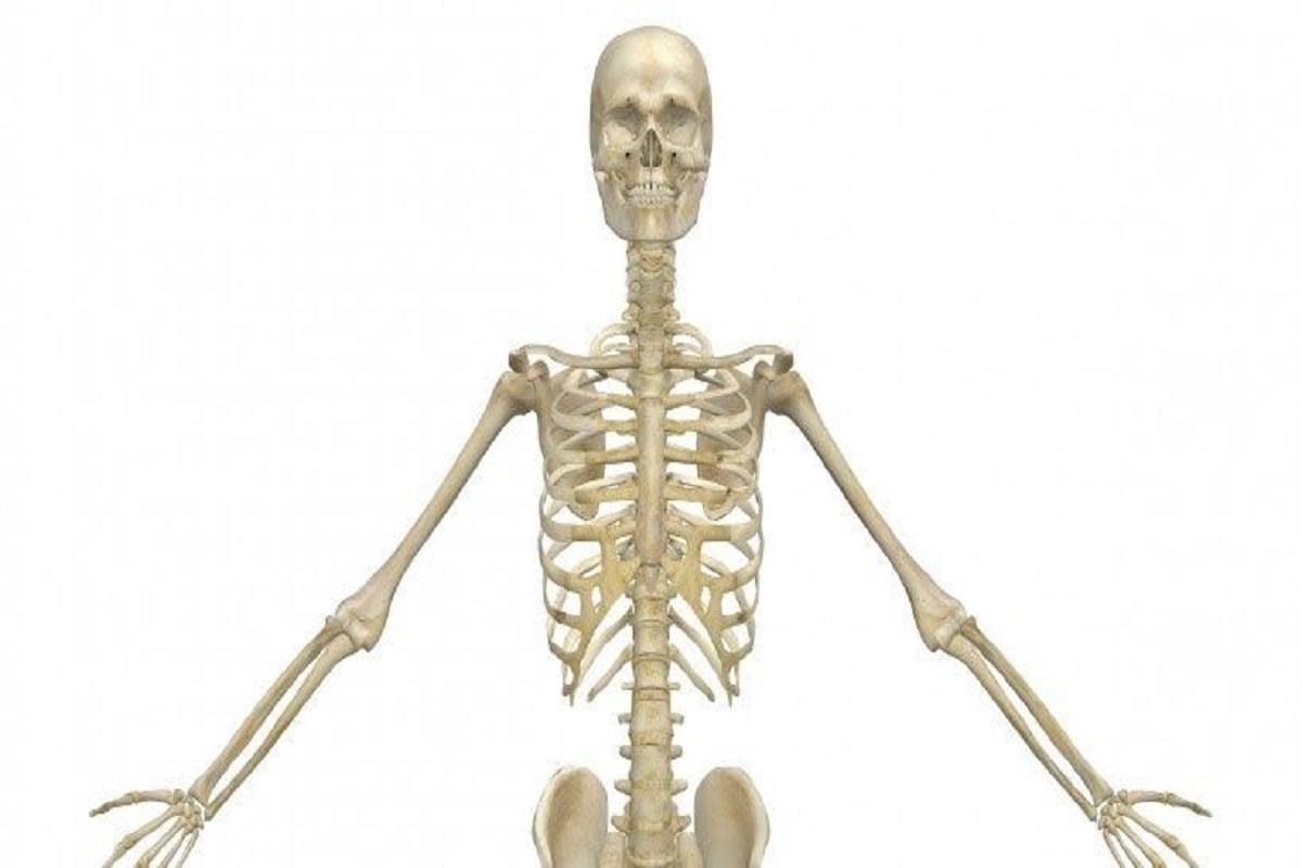 استخوان ها و اسکلت بدن (بخش دوم)