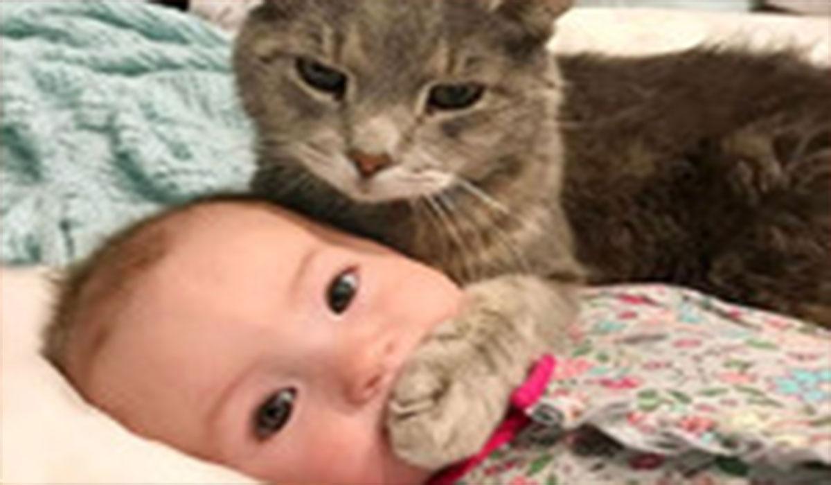 نجات کودک از مرگ توسط گربه!