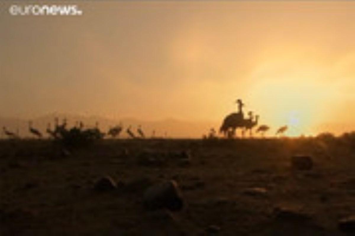 شکار کُلنگ در افغانستان!