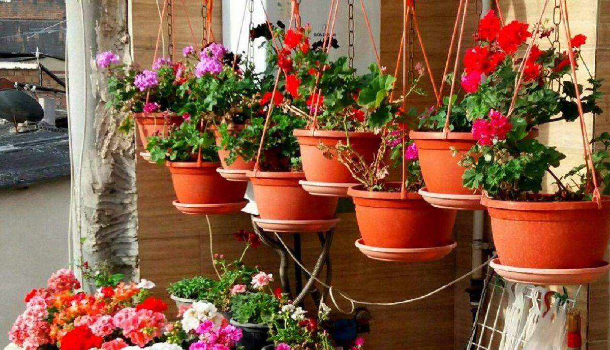 سبک زندگی   آشنایی و پرورش انواع گل