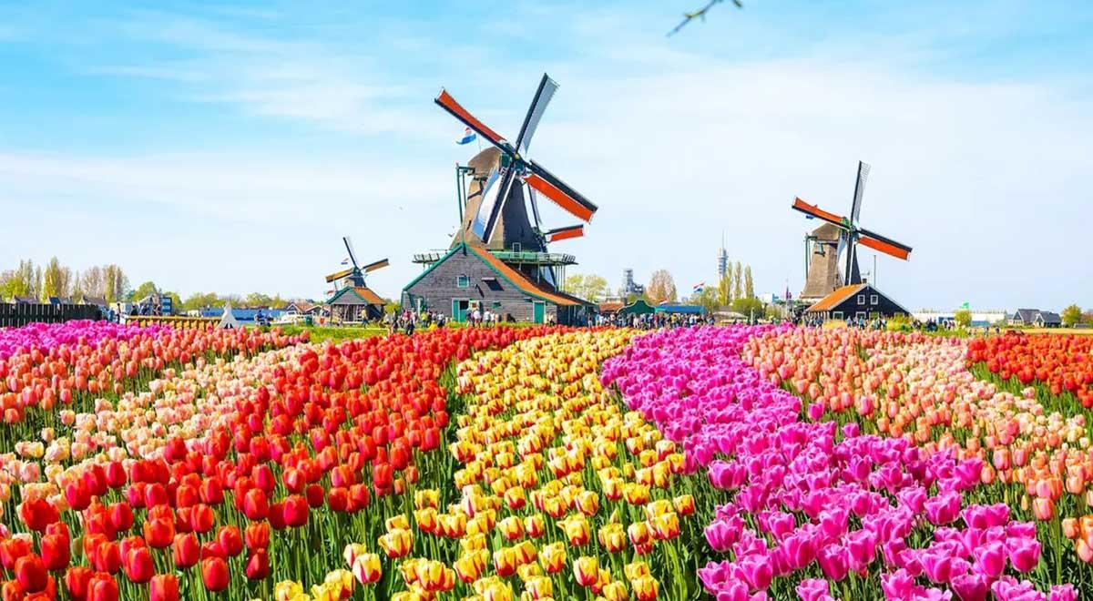 طرح زیبای تولید کنندگان گل و گیاه هلندی با گل های فروش نرفته