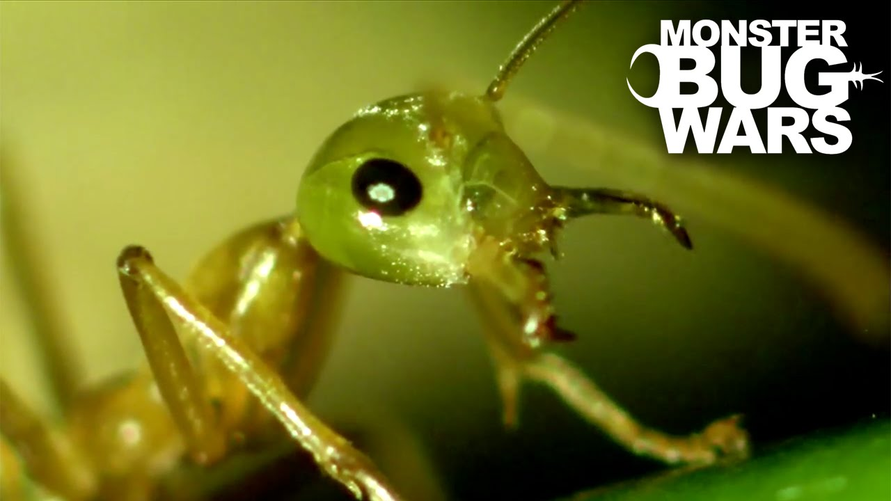 حمله عقرب به قلعه مورچههای بافنده / قسمت اول