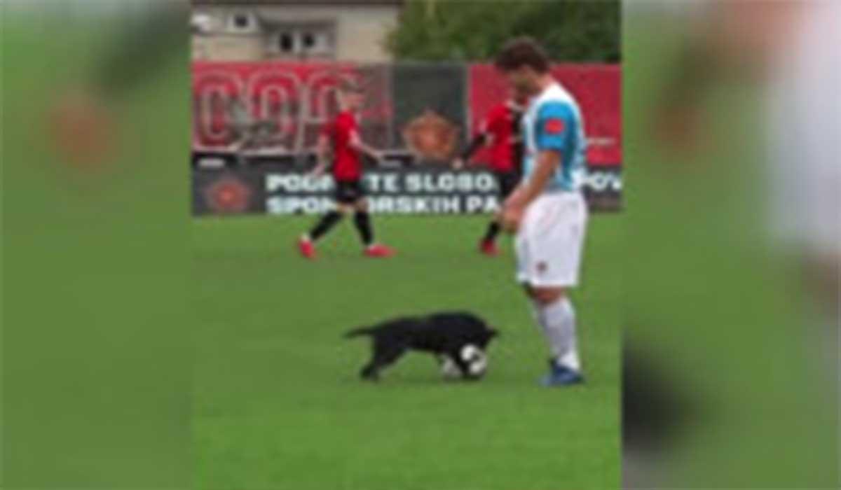 سگ فوتبالیست لایی زن!
