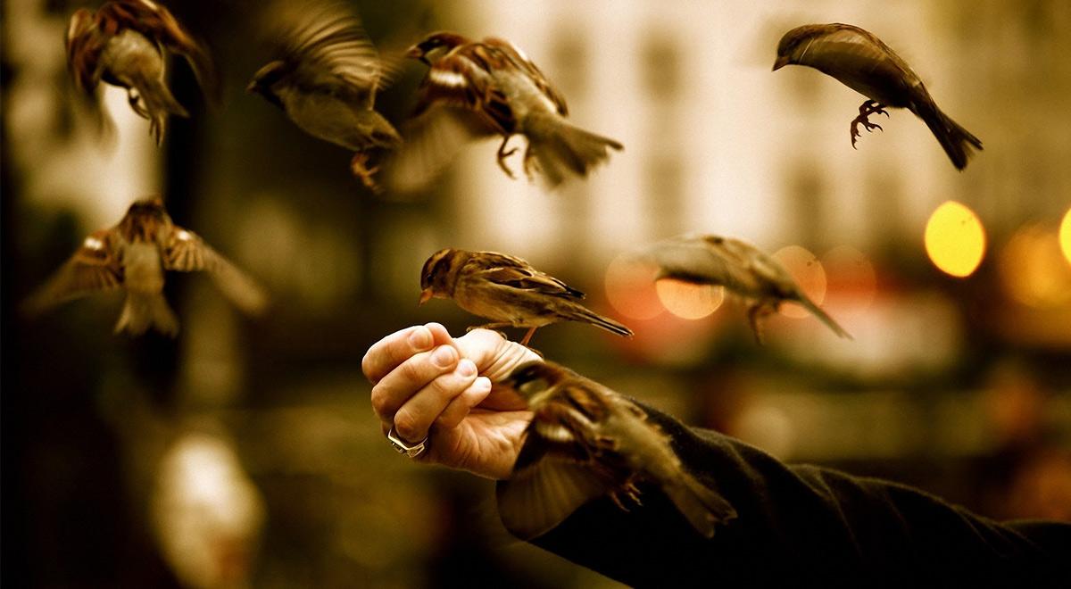 سخن آوا   مهربانی با تمام موجودات (استاد معاونیان)