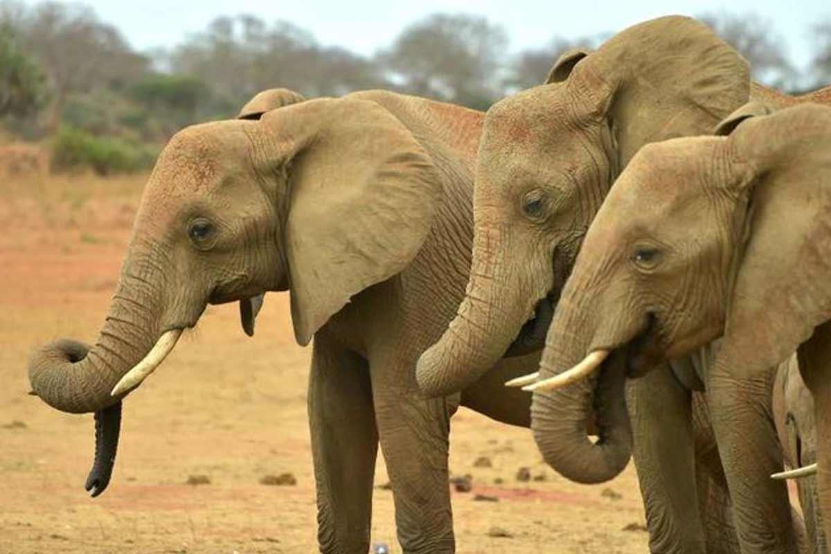 مستند پارکهای ملی آفریقا (قسمت دوم)