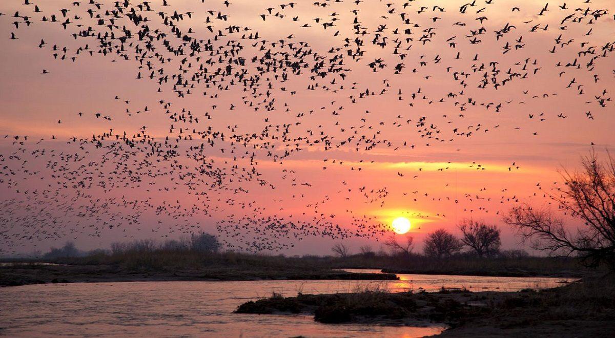 قتل عام یک میلیون پرنده مهاجر در شمال ایران