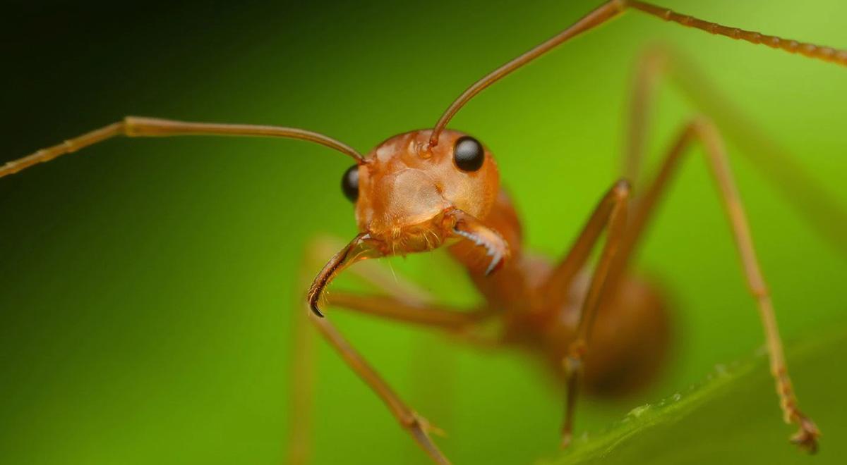 حمله عقرب به قلعه مورچههای بافنده / قسمت دوم
