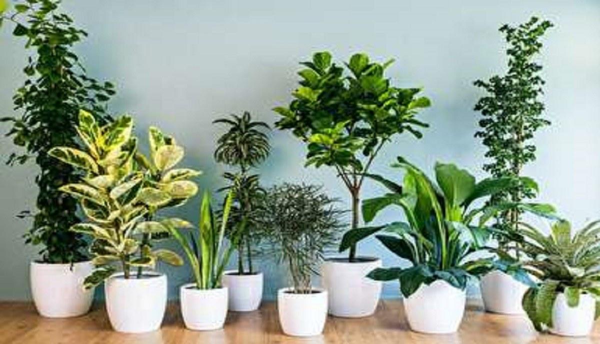 چه گیاهانی برای نگهداری داخل آپارتمان مناسب هستند؟