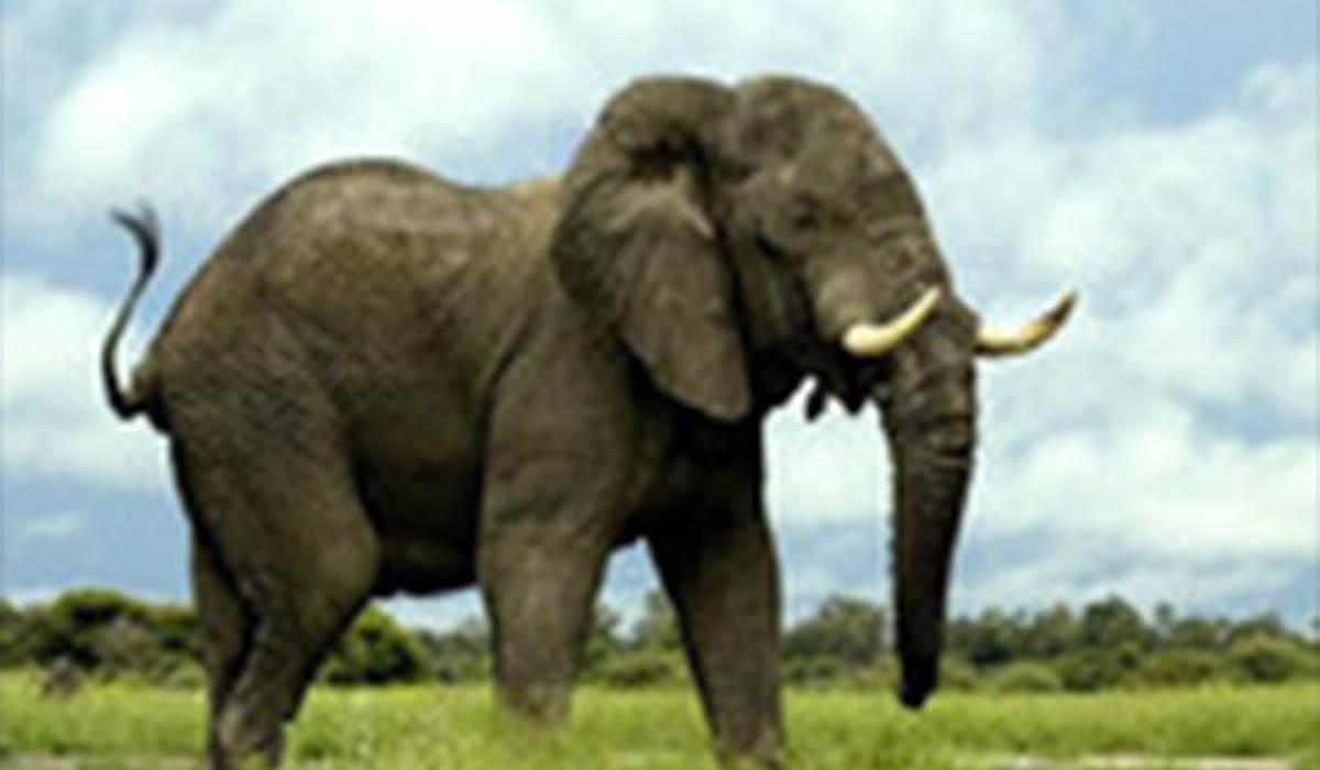 نجات یک فیل در آستانه سقوط در یک حفره عمیق