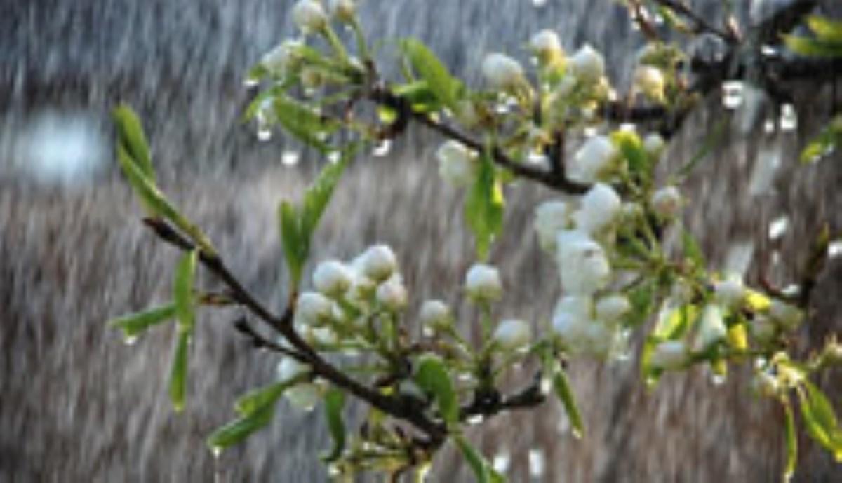 پرتو باران