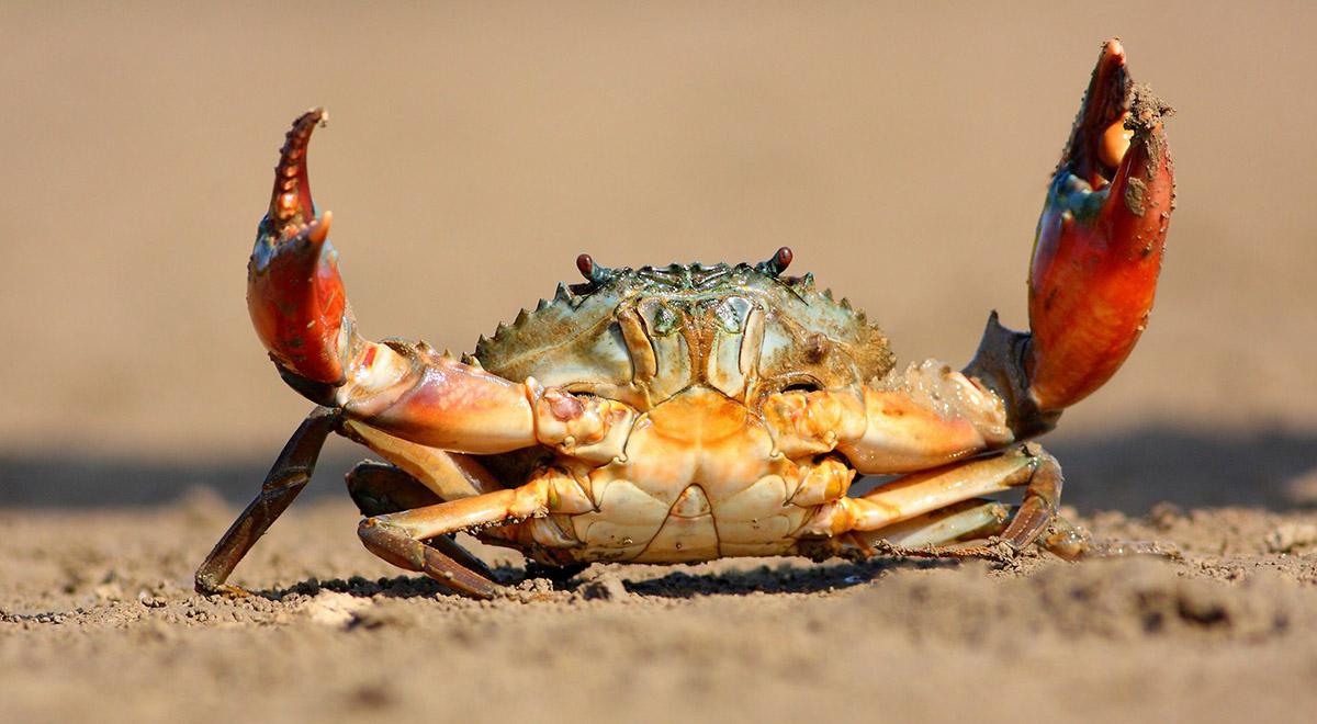 تا حالا نوشتن خرچنگ دریایی رو دیده بودین !!!