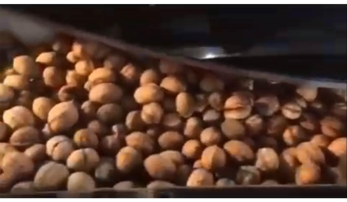 جاسازی گردو در کاپوت ماشین توسط یک موش!