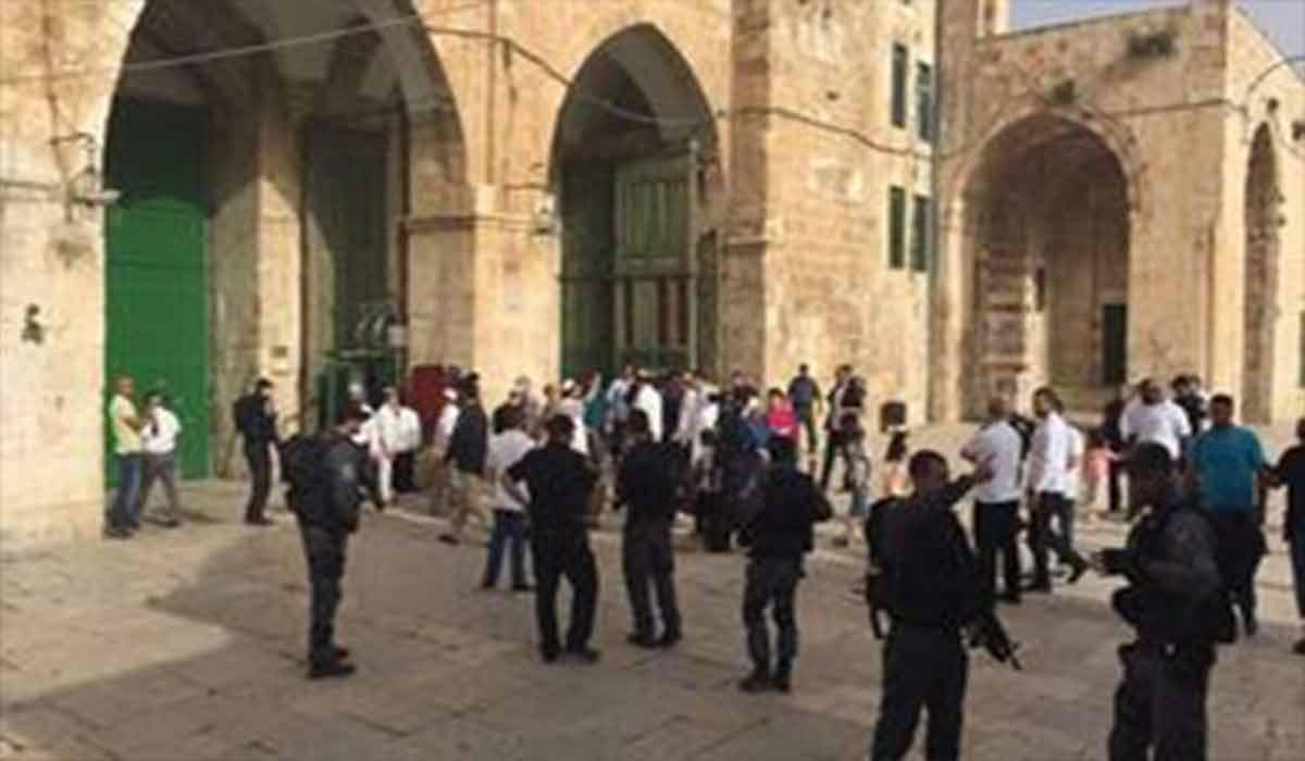 هتک حرمت مسجد الاقصی توسط کفتارها