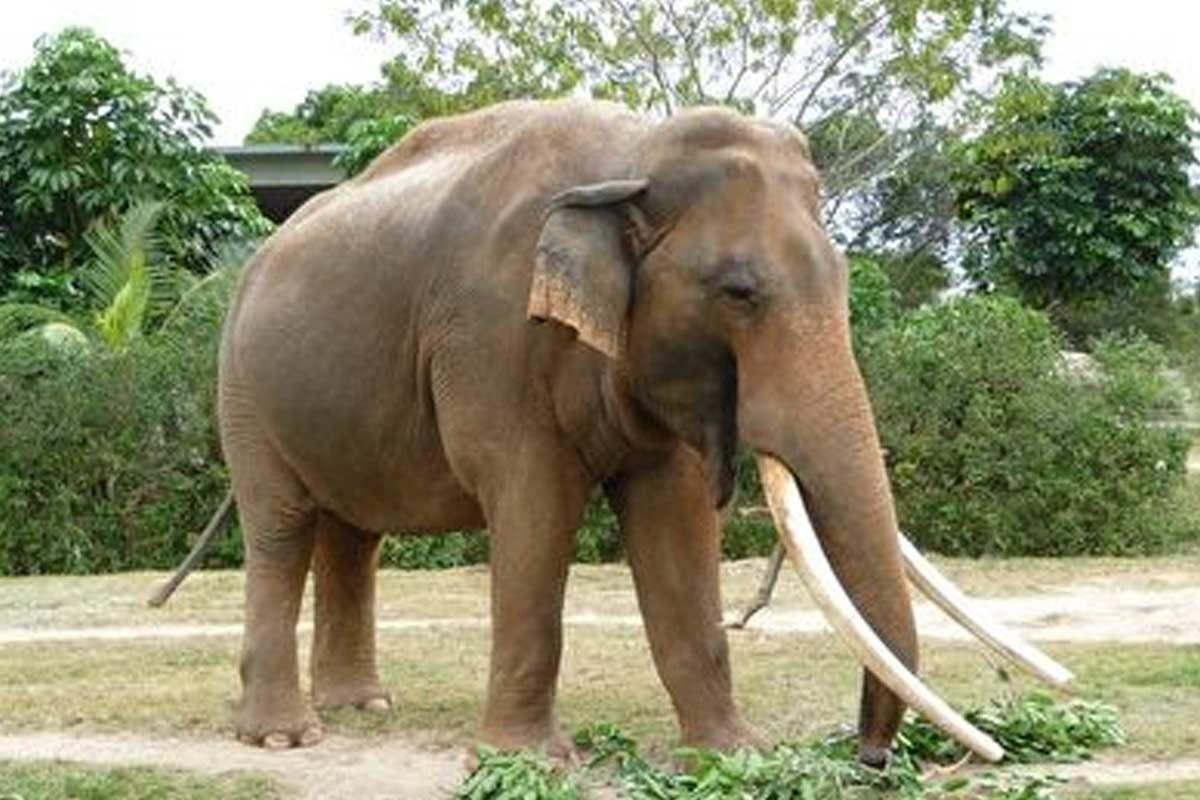 حرکت نمایشی با فیل