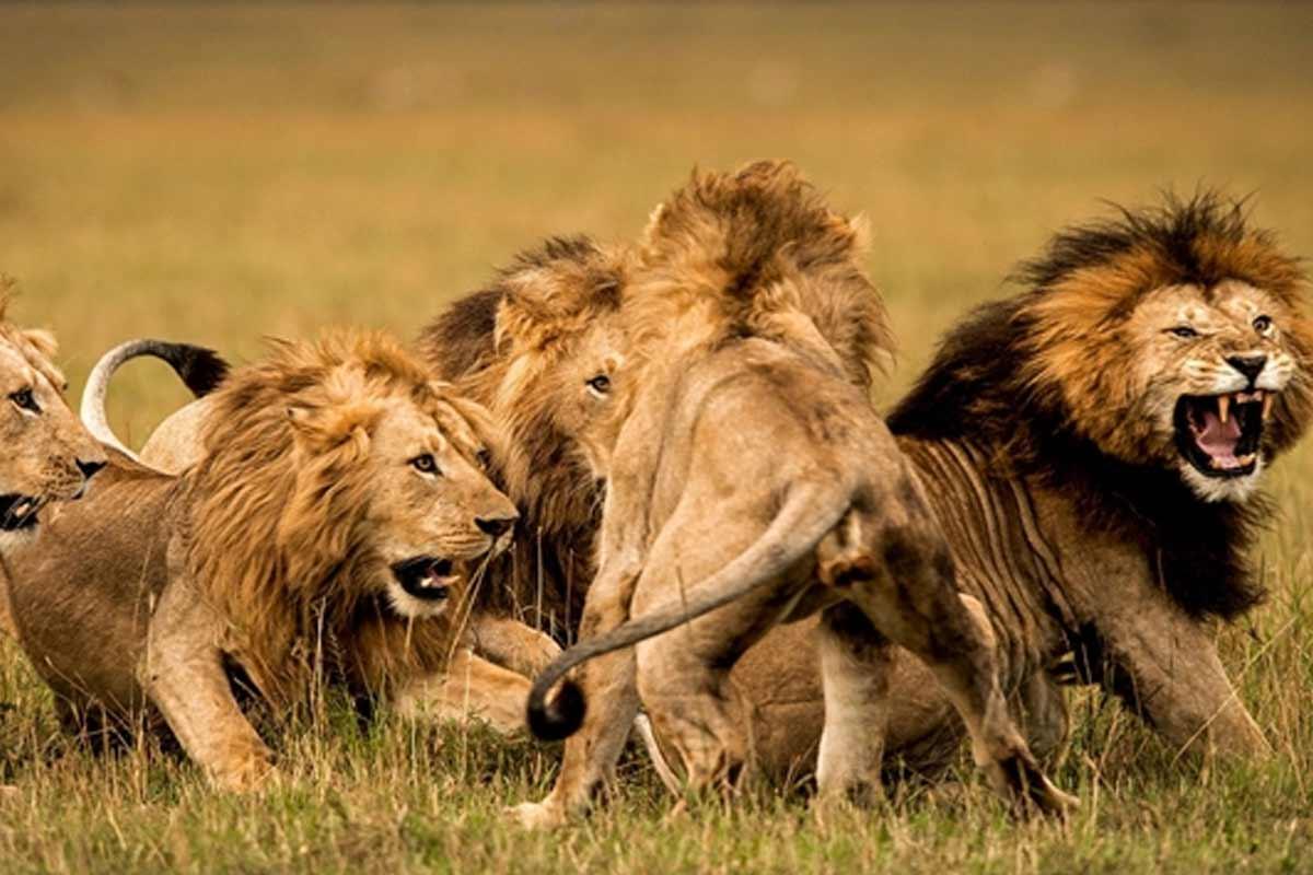 مستند پارکهای ملی آفریقا (قسمت اول)