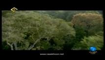 شگفتی های خلقت - در اعماق جنگلها