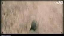 """فیلم کوتاه """"ویزرو"""""""