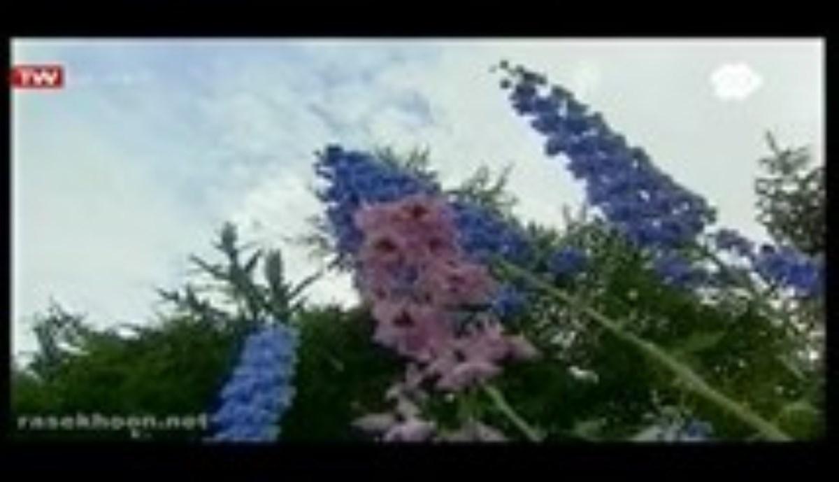 جاذبه گل ها - این برنامه بلگونیوم