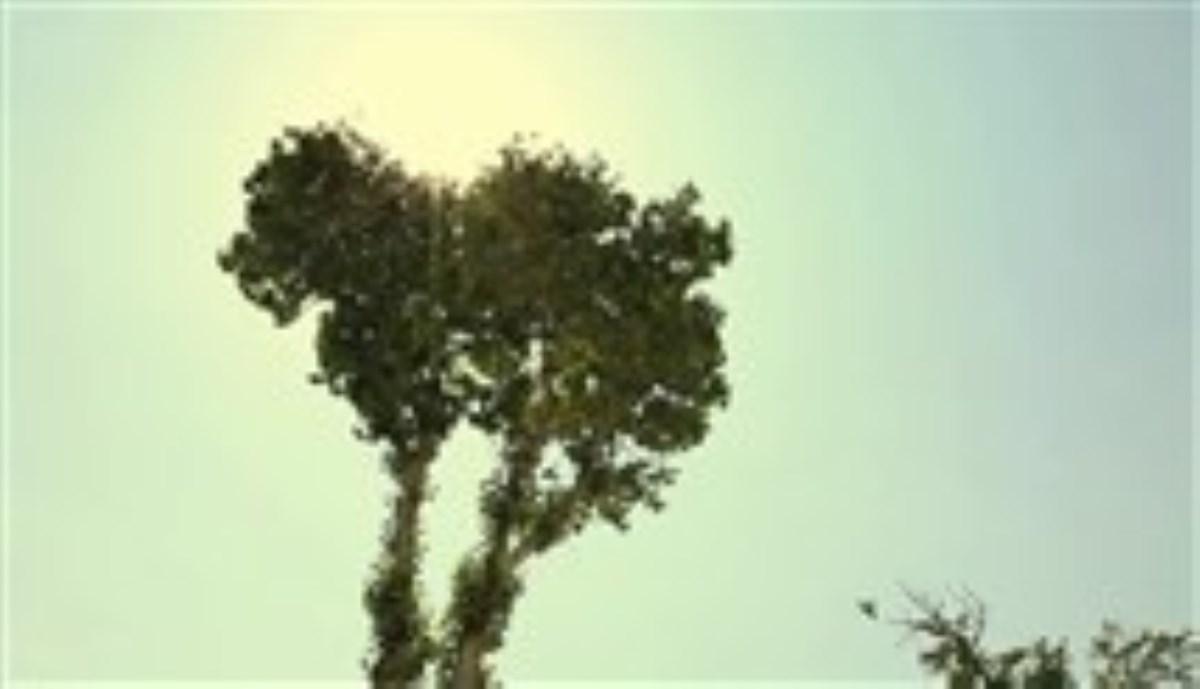 موزیک ویدئو «از تبار آسمان»/ آخرین اثر پویا بیاتی
