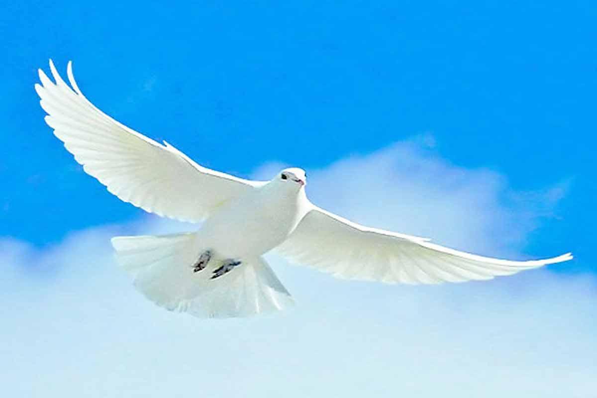 ترانه «کبوتر»/ فریدون آسرایی