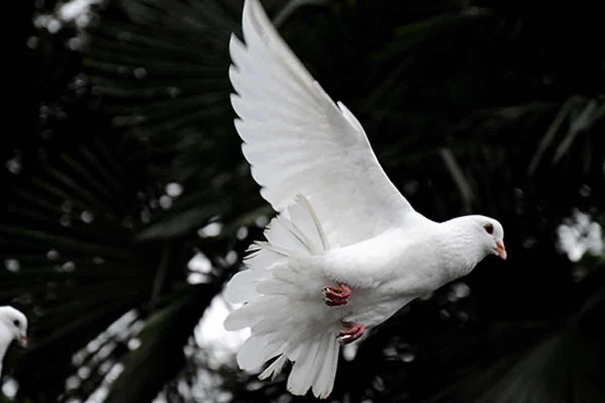 دعا کبوتر عشق است/ استوری دعای فرج