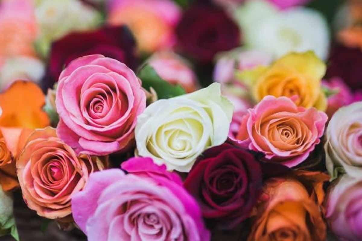 استوری عاشقانه | گل عاشق: فریدون آسرایی