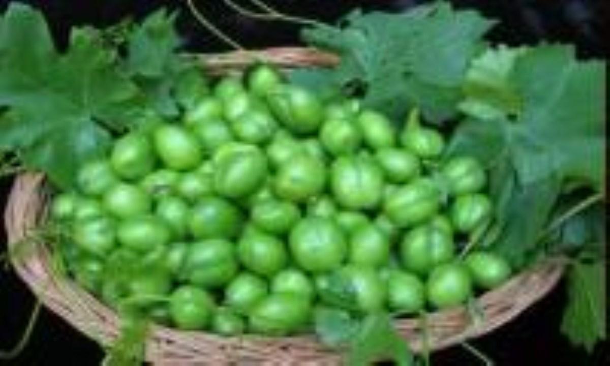 از خوردن گوجه سبز در بهار غافل نشوید