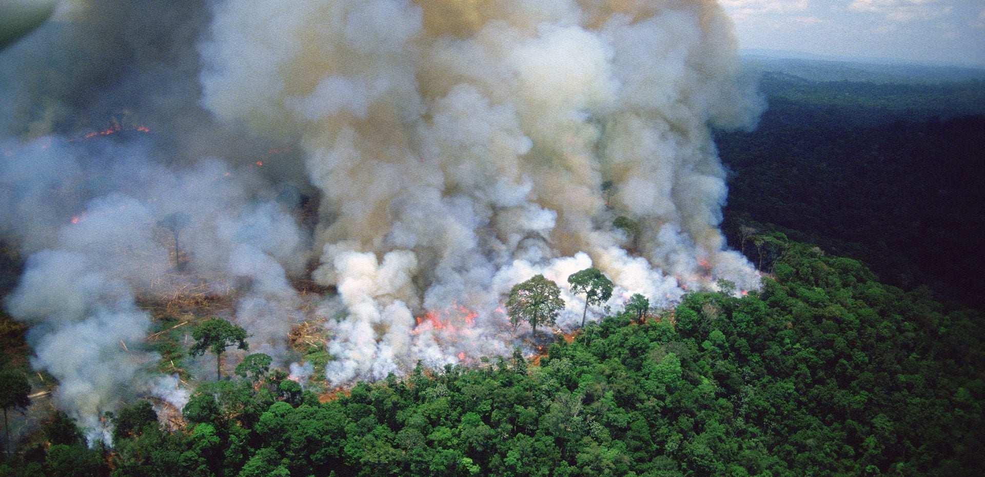چرا آتش سوزی در آمازون برای جهان اهمیت دارد؟