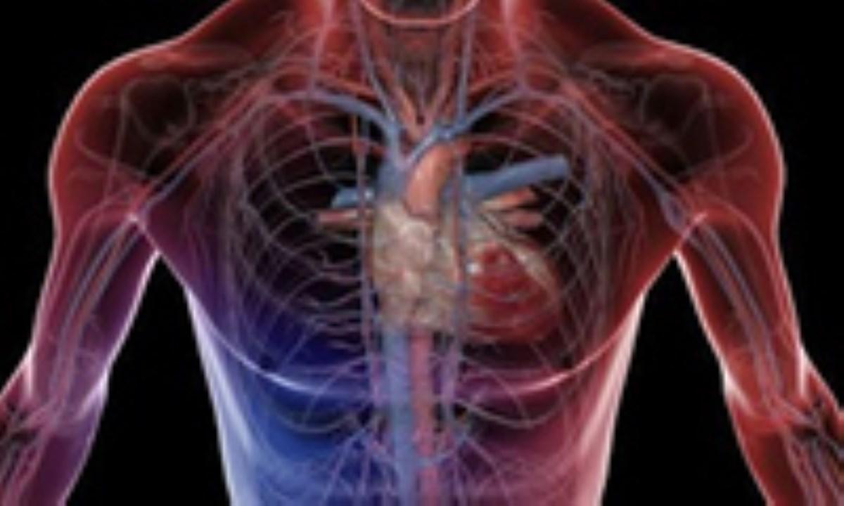 موفقیت محققان ایرانی در ساخت سیستم لامسهیی تشخیص شریان و گرفتگی آن
