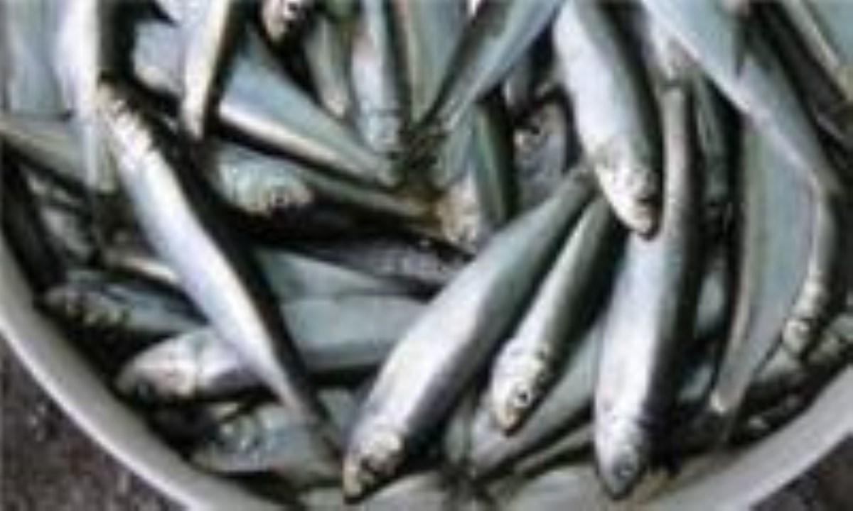 چگونه ماهی سالم را تشخیص دهیم؟