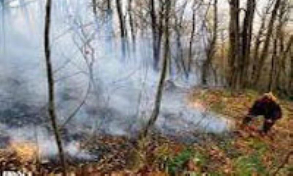 خسارتی به درختان جنگلی گرگان وارد نشد