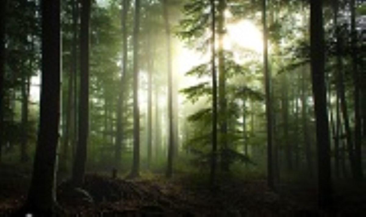 فیلمی جالب از تنفس زمین در جنگلهای «کبک» کانادا