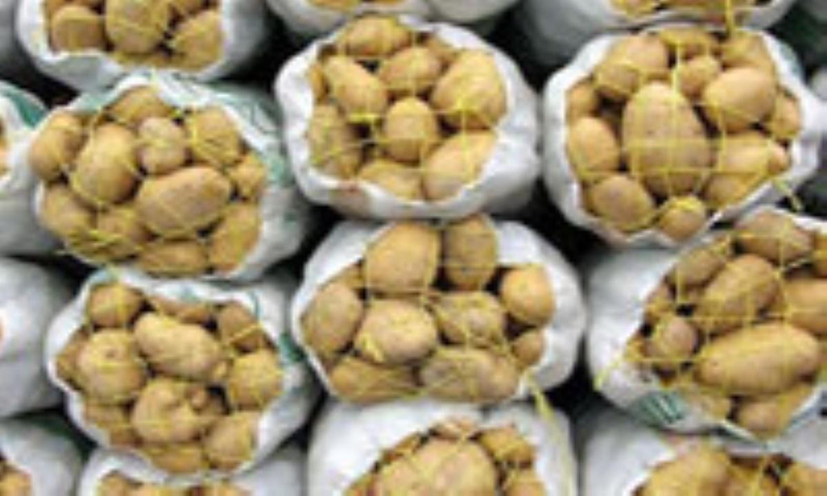 کشاورزان خارج از سهمیه ابلاغی سیبزمینی میکارند