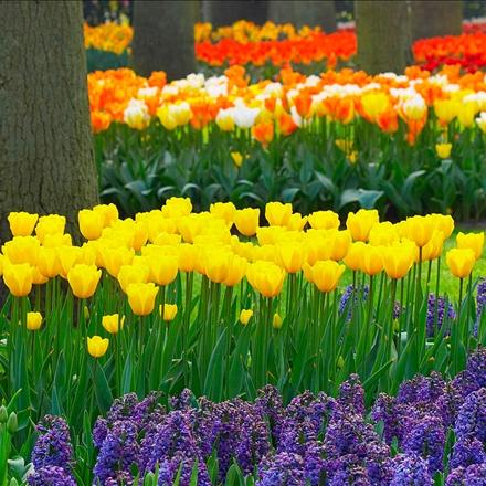 باغ گلهای لاله
