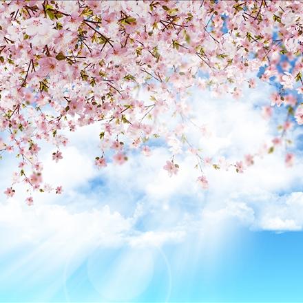 شکوفه ها در آسمان