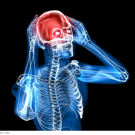 آناتومی و فیزیولوژی