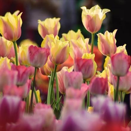 عکس گل های رنگارنگ