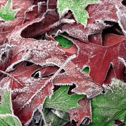 خزان پاییزی