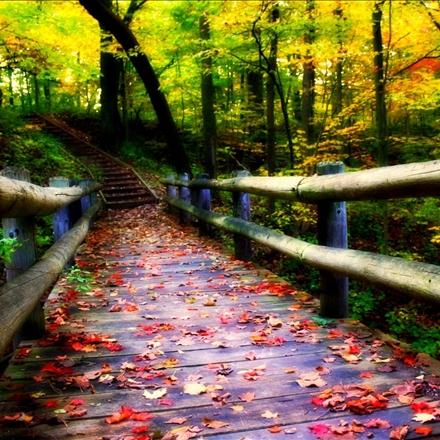 پلی زیبا در وسط جنگل