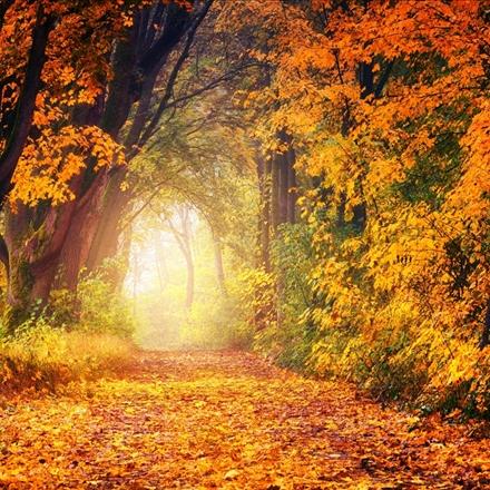 نمایی زیبا ازفصل پاییز